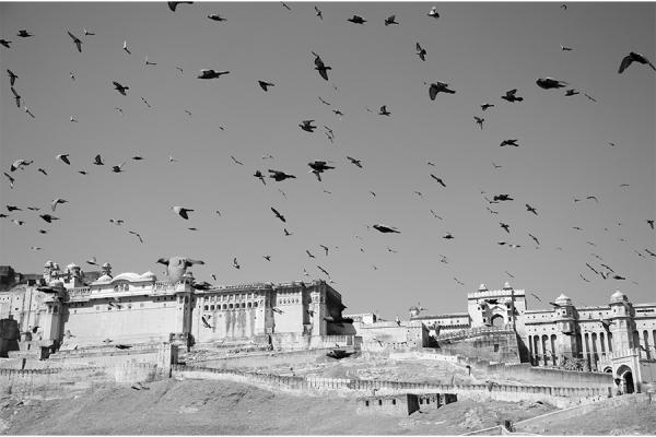 SERGE HORTA - THE BIRDS