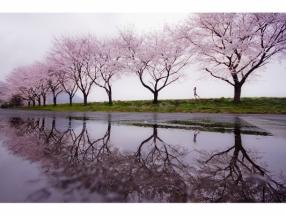 KOUJI TOMIHISA - RAIN OF SPRING