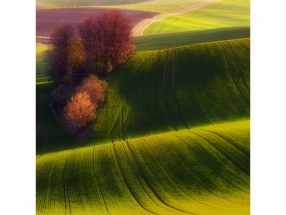 PIOTR KROL (BAX) - GREEN FIELDS