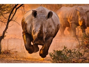 JUSTUS VERMAAK - RHINO LEARNING TO FLY